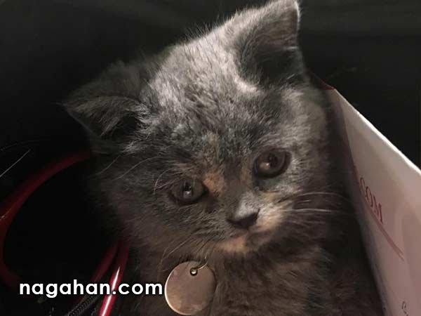 پنهان شدن گربه در کیف بهاره رهنما!