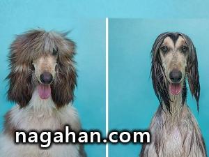 عکس های خنده دار قبل و بعد از حمام حیوانات