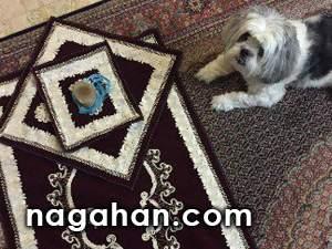 واکنش پرستو صالحی به عکس سجاده نماز در کنار سگ خانگی اش!
