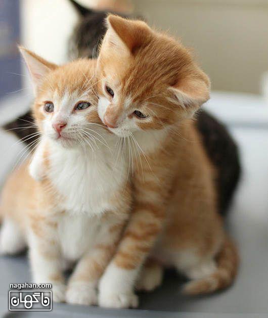 عکس بامزه گربه های بازیگوش