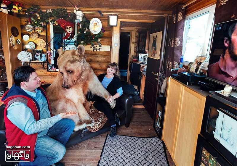 عکس خرس اهلی - استیفان در کنار خانواده تلویزیون می بیند