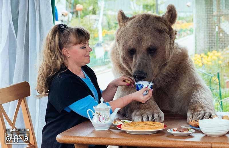 و در کنار خانواده اش از نوشیدن چای لذت می برد - عکس خرس اهلی