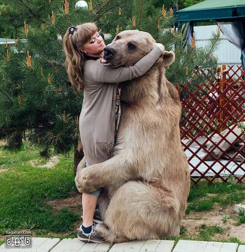استیفان هرگز این زوج را گاز نگرفته است - عکس خرس اهلی