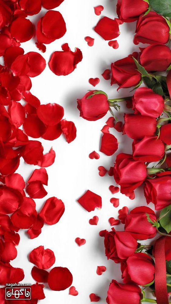 گل های رز قرمز مخصوص ولنتاین