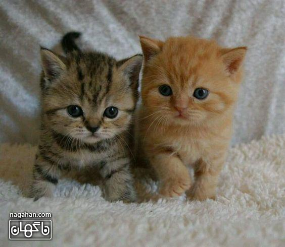 عکس گربه بچه ملوس و بامزه