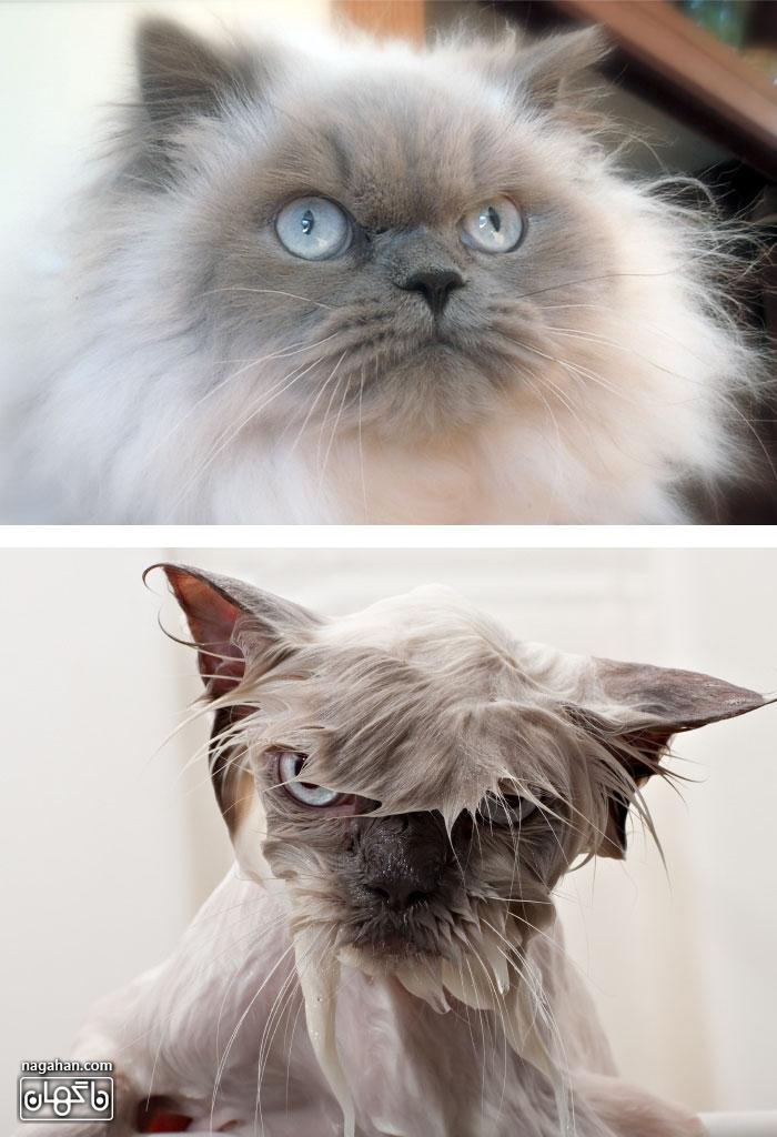 عکس قبل و بعد