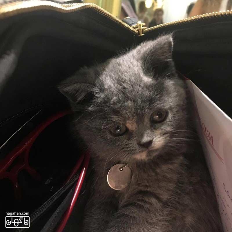 گربه بهاره رهنما به نام سالوت