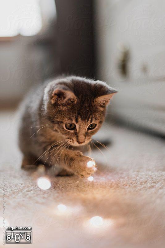 عکس گربه بازیگوش
