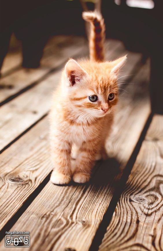 عکس گربه تنها