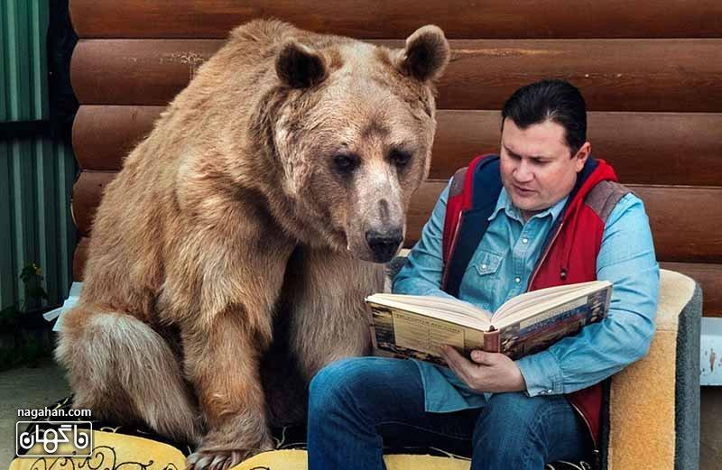 عکس خرس اهلی