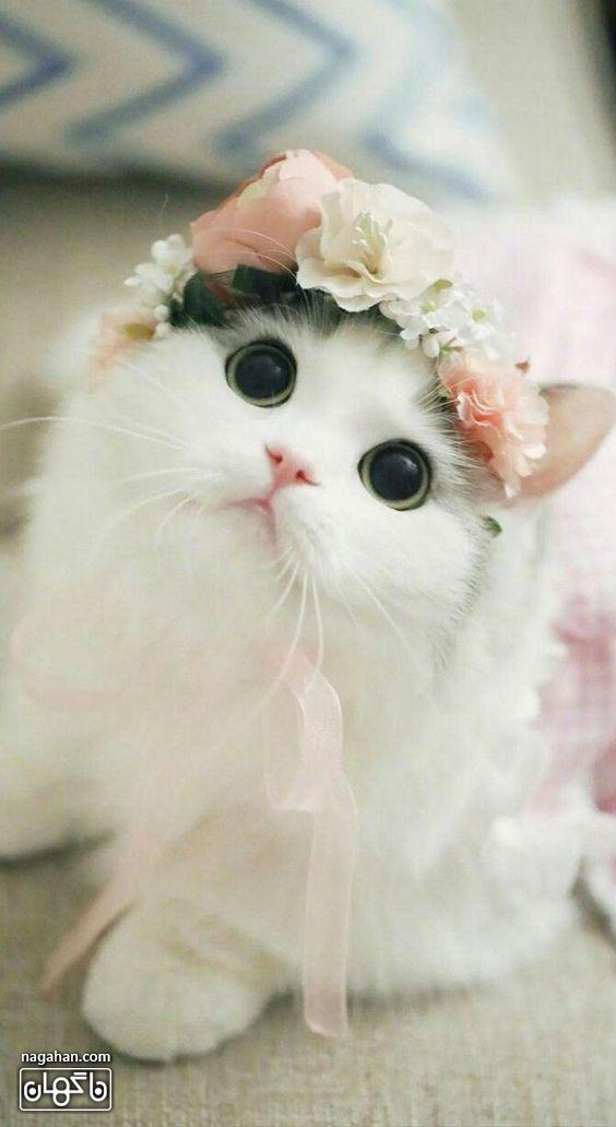 عکس بانمک و بامزه گربه با گل سر
